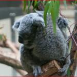 動物とふれあえる東京の動物園を紹介!実際にふれあえる時間帯は?