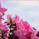 五月病の原因と予防について