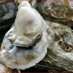 牡蠣の季節到来!食あたりの症状と潜伏期間、対処法、危険な季節について