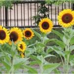 夏バテ対策、予防によく効く食事と水分の採り方について。