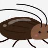梅雨時期のゴキブリ対策とは